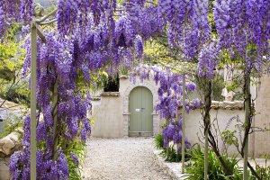 Arbustes Arbres - travaux de jardinage en mars